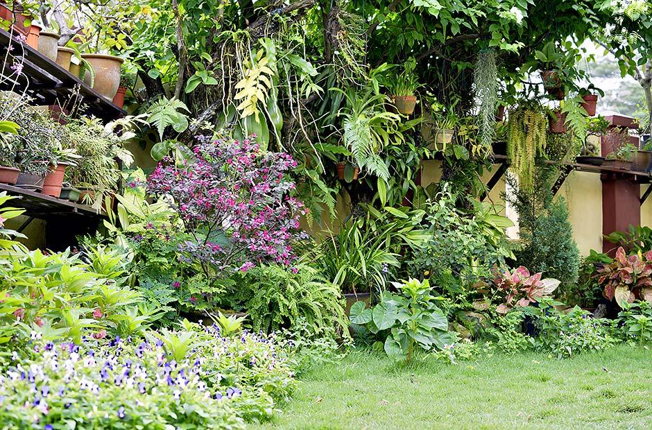 My garden, flora